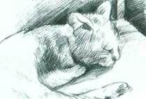Спящие домашние животные