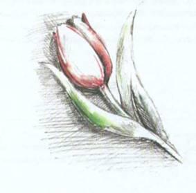 Рисуем листья и цветы карандашом