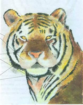 Мы рисуем тигра
