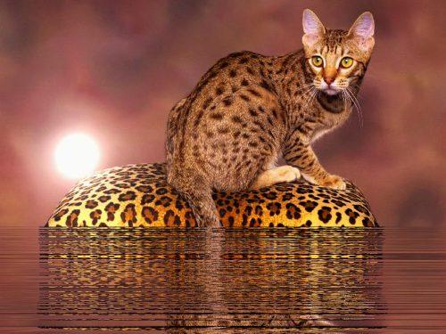 леопардовый рисунок
